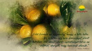 Kerüld el a betegségeket, ügyelj az őszi vitaminpótlásra!