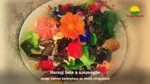 Harapj bele a szépségbe, avagy bátran kísérletezz az ehető virágokkal