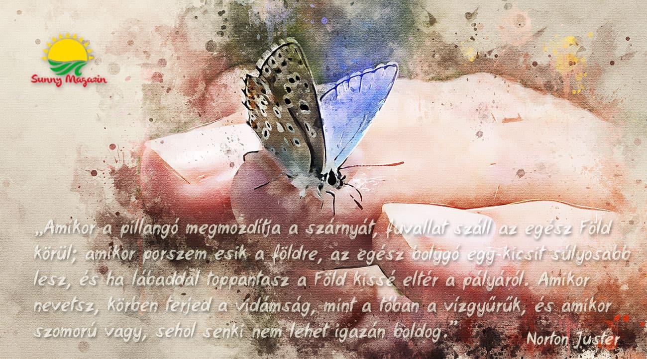A pillangó