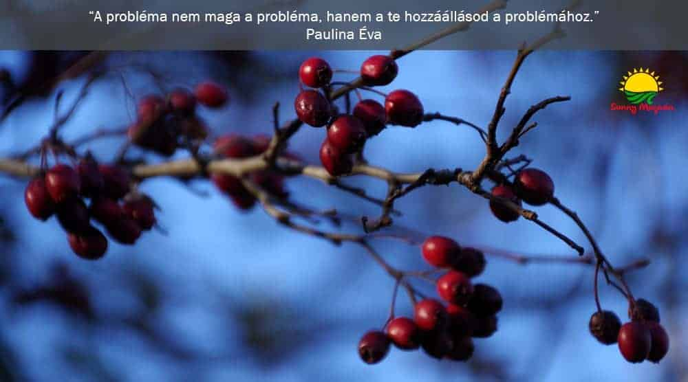 A problémák fája